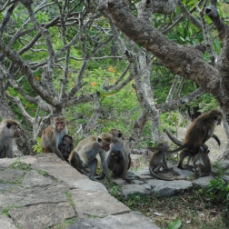 Temples troglodytiques de Dambulla