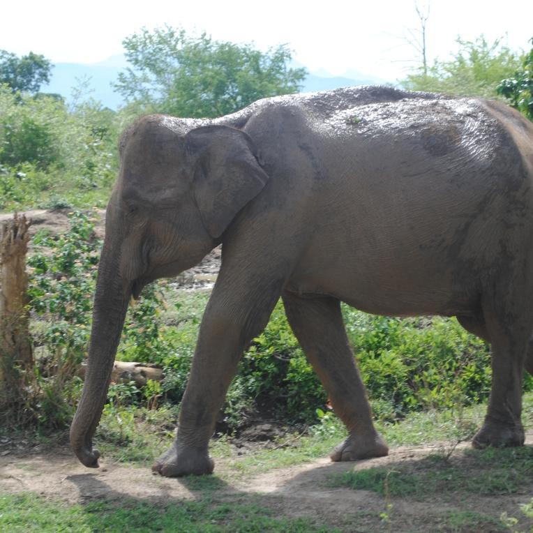 Parc national d'Udawalawe